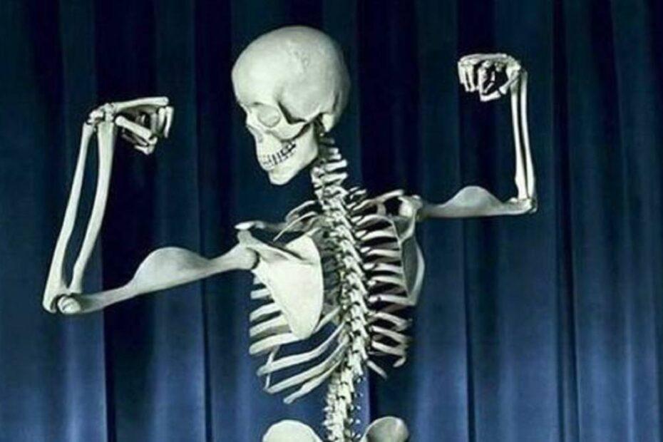 salud músculos, tendones y ligamentos