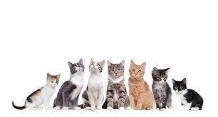 Los gatos pueden ayudar a mejorar las habilidades sociales de los niños autistas y reducir la ansiedad