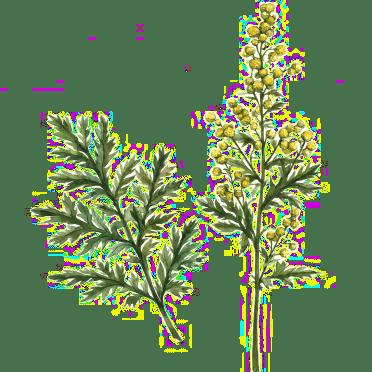 Qué saber sobre la artemisa