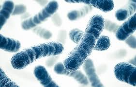 Bacterias, prebioticos, probióticos