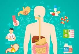 ¿Qué alimentos causan reflujo ácido?