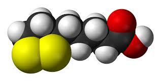 El ácido lipoico parece restablecer y sincronizar los ritmos circadianos
