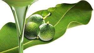 Beneficios del aceite de tamanu