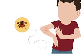 ¿Qué es la enfermedad de Lyme?