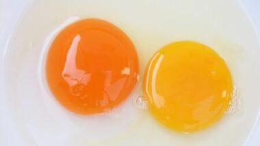 Yemas del huevo