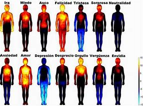Mapeo de emociones en el cuerpo